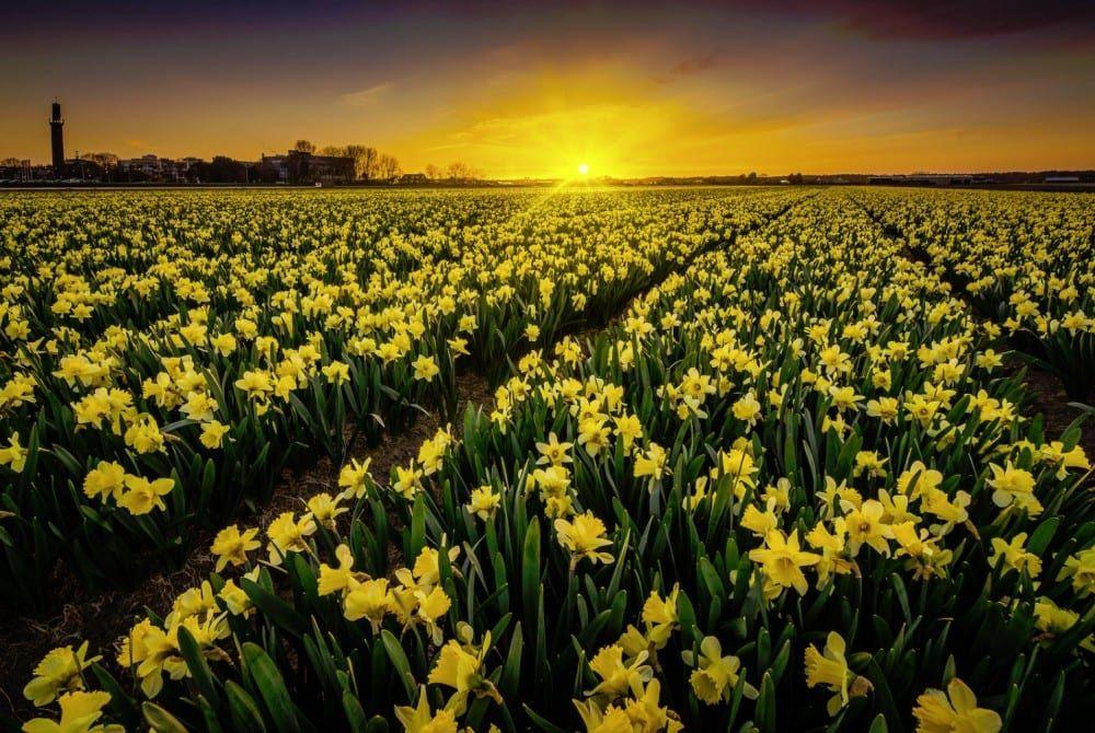 Bloemen Nederland