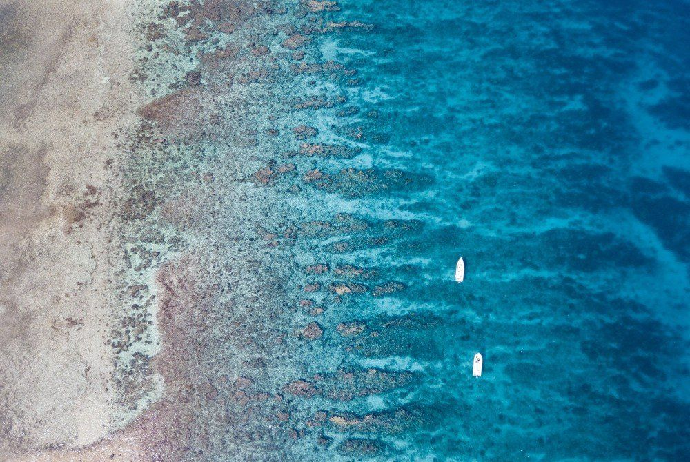 turneffe island