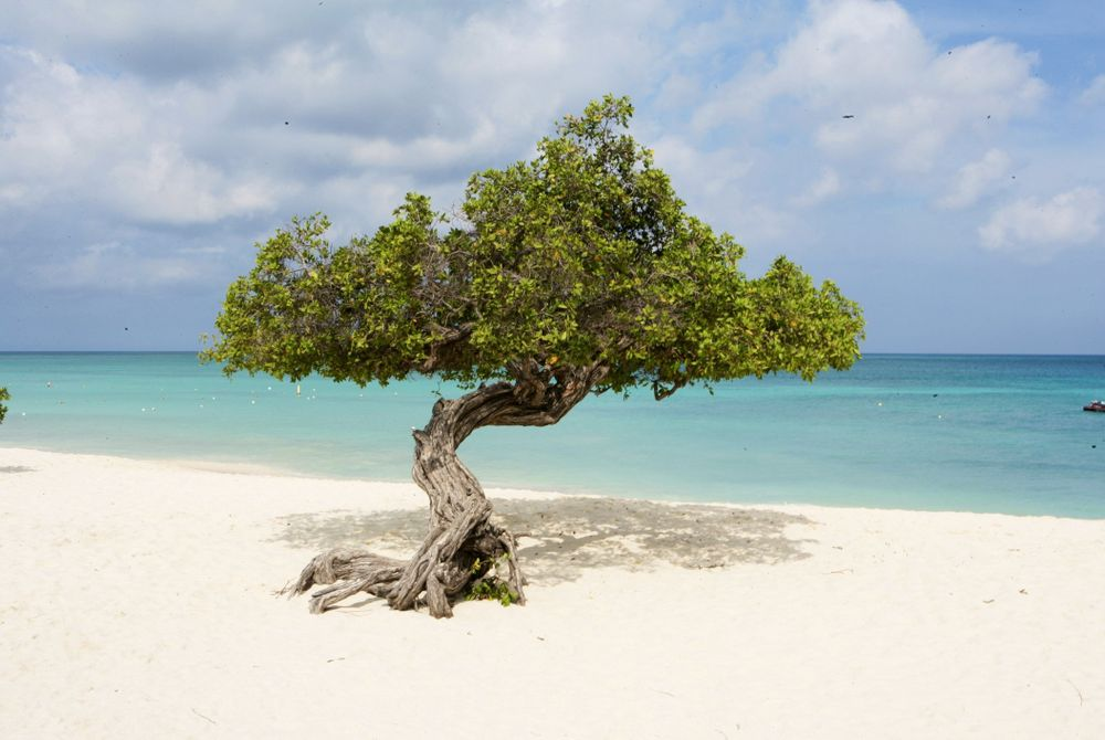Aruba: zonovergoten paradijs