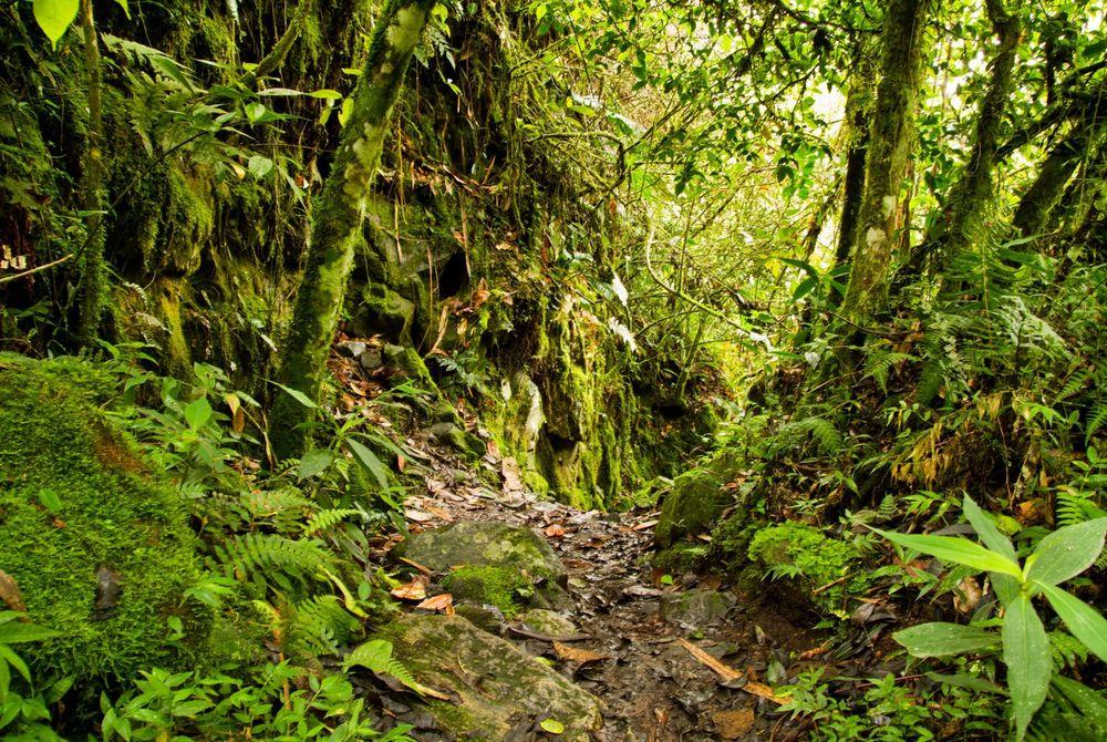 Het Yasuni National Park in Ecuador