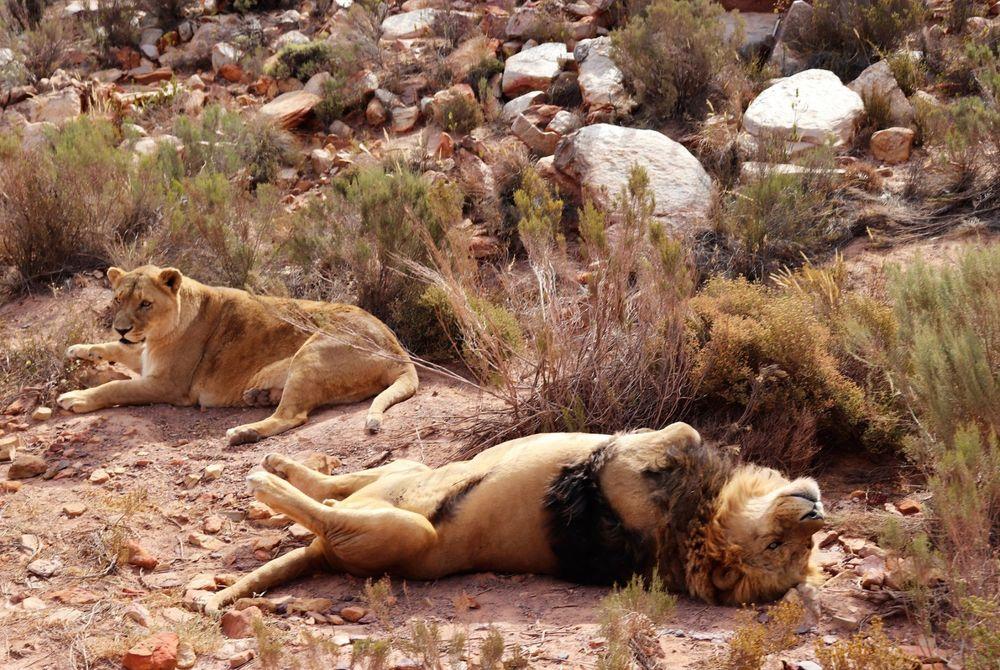 Het Aquila Private Game Reserve in Zuid-Afrika
