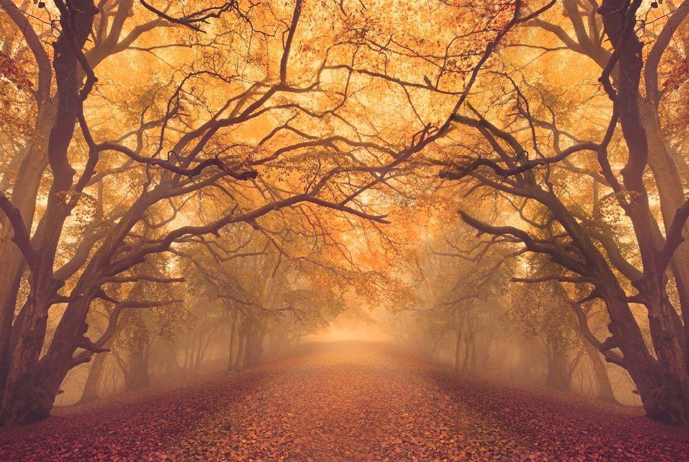 FOTOSERIE: 20 inspirerende herfst foto's