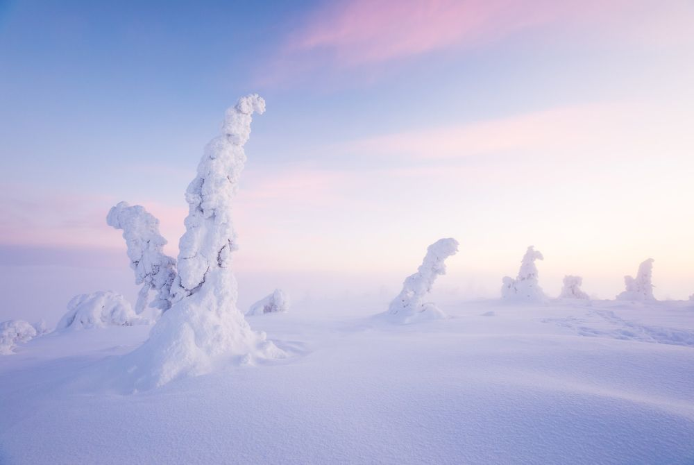Winter in het Riisitunturi National Park (Finland)