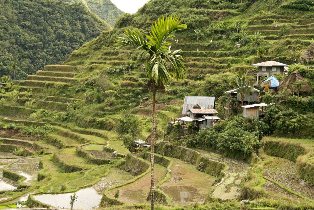 FOTOSERIE: 2.000 jaar oude rijstterrassen in de Filipijnen