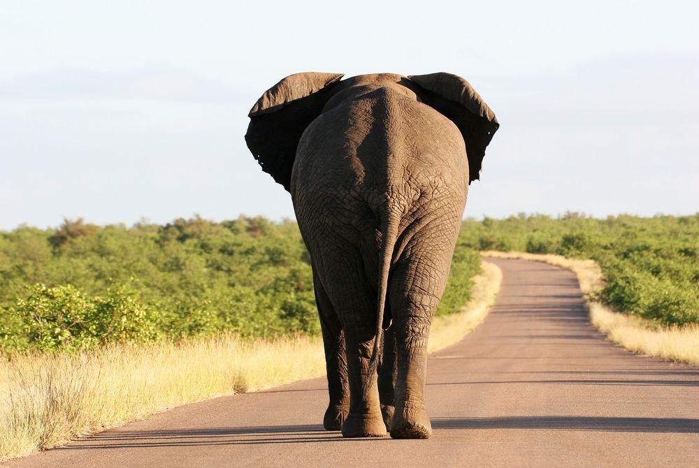 Waarom rijden op een olifant NIET op je bucketlist moet