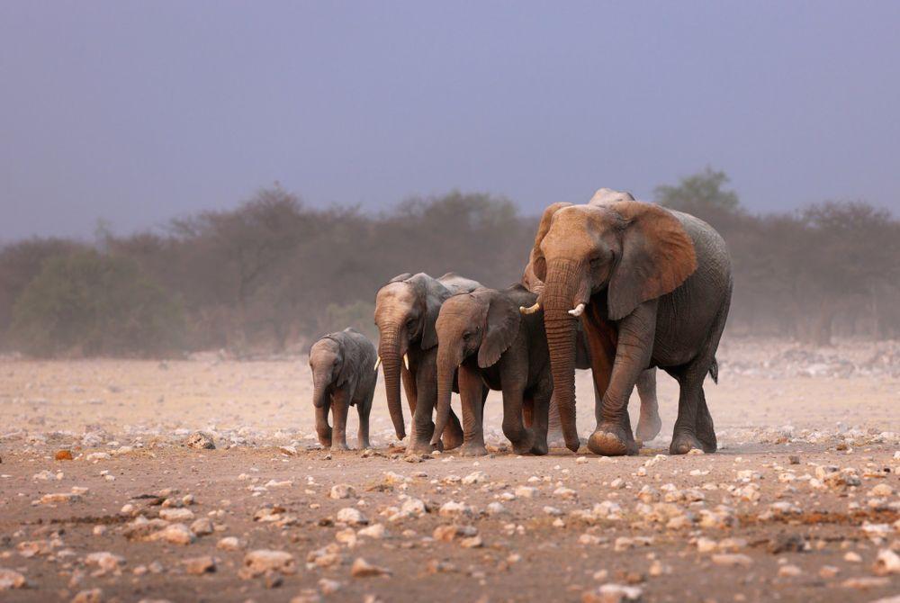 Op eigen houtje op safari: Etosha NP in Namibië