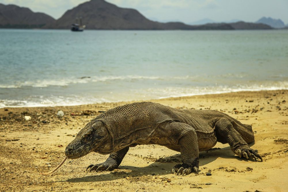 Flores: Jurassic Park met witte stranden