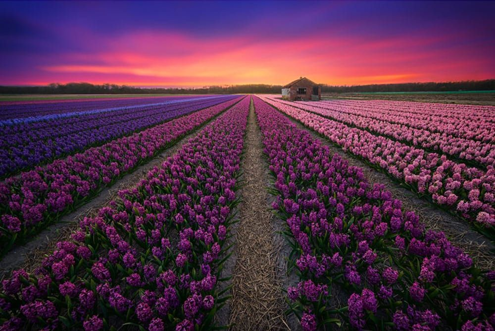 29x Fantastische foto's die laten zien dat Nederland prachtig is