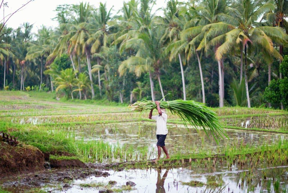 Must-see voor Azië-fans: prachtig filmpje van het échte Bali