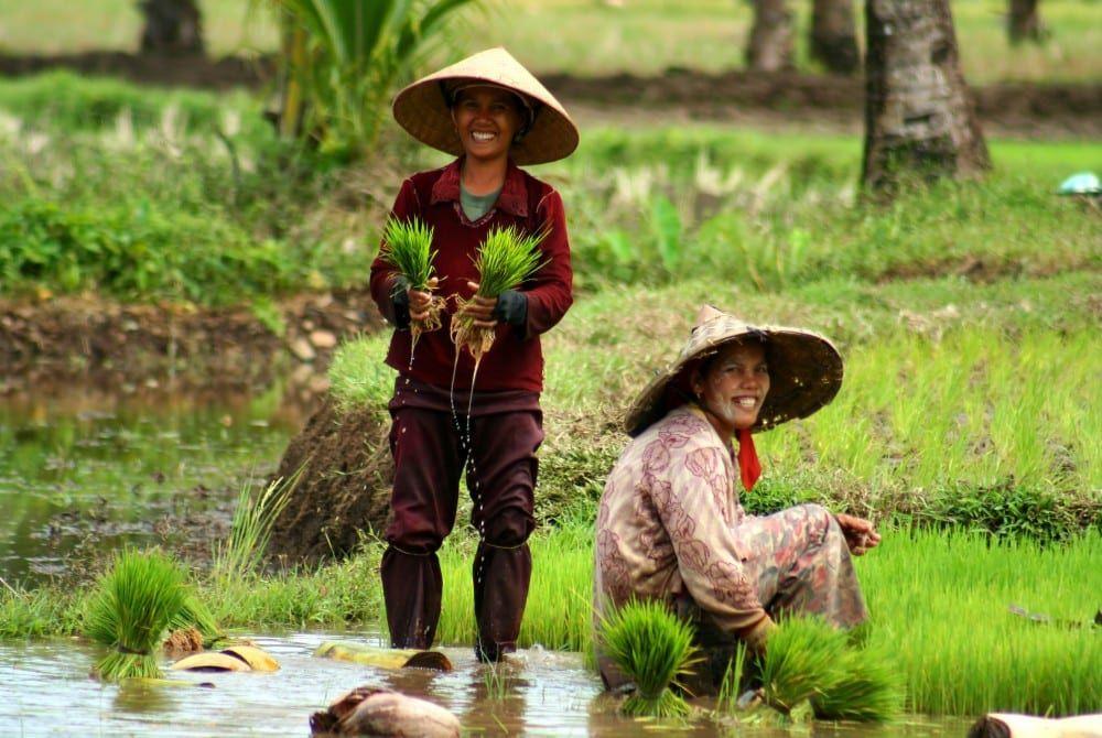 Reisgids Sumatra: Bezienswaardigheden, tips én routes