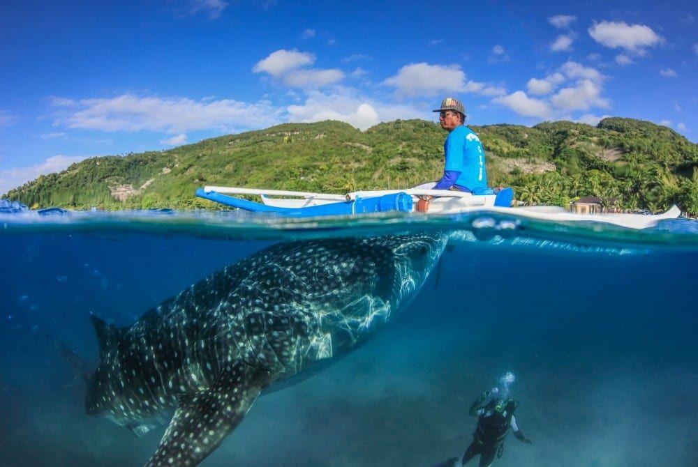 Donsol in de Filipijnen: zwemmen met walvishaaien