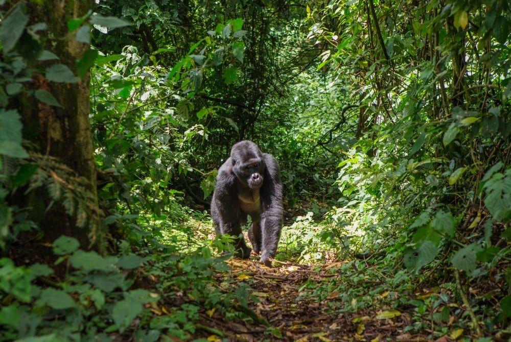 De mooiste plekken van Oeganda: Top 10 bezienswaardigheden