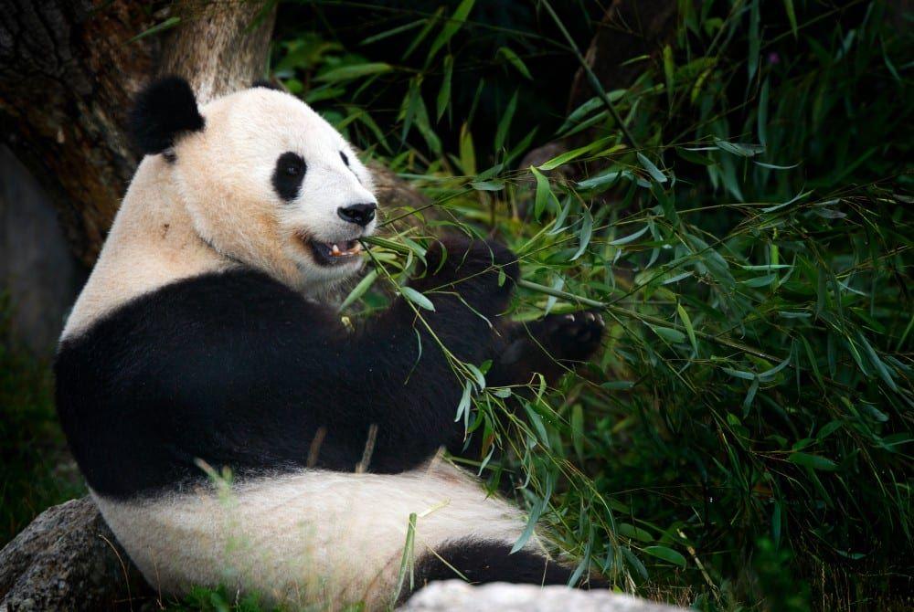 De 5 mooiste natuurgebieden in China