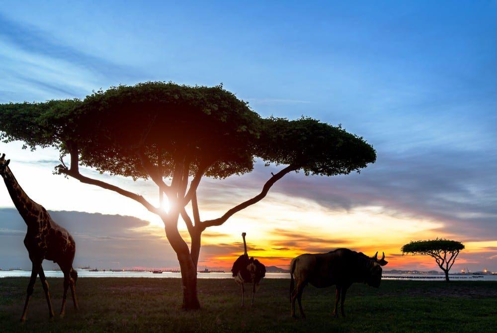 Rondreis Zuid-Afrika, Botswana, Namibië & Victoria Falls: machtige must-do!