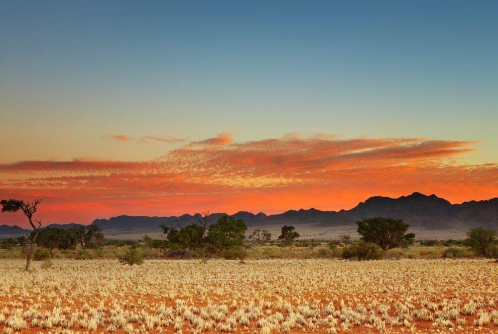 De Kalahari woestijn: unieke plek in zuidelijk Afrika