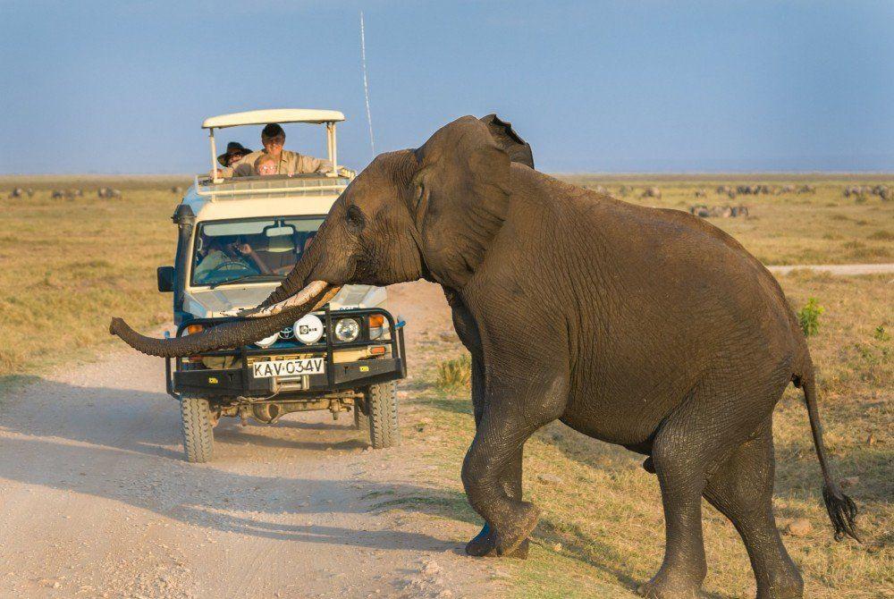In een notendop: safari in Kenia