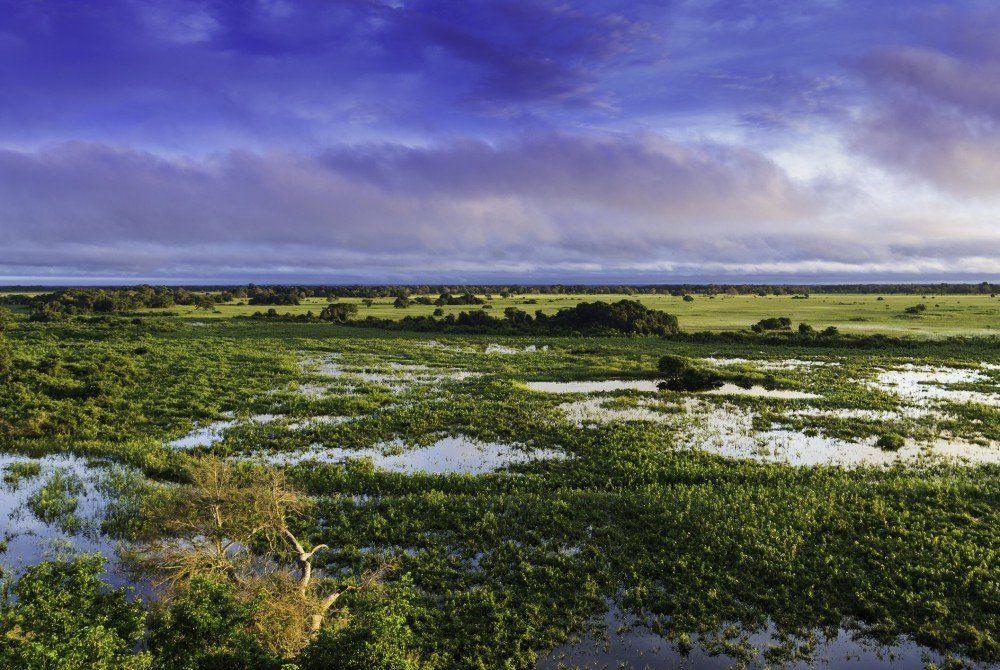 Brazilië tip: Ontdek de ongerepte natuur van Pantanal
