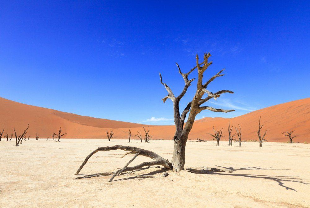 Zo vrij als een vogel in Namibië