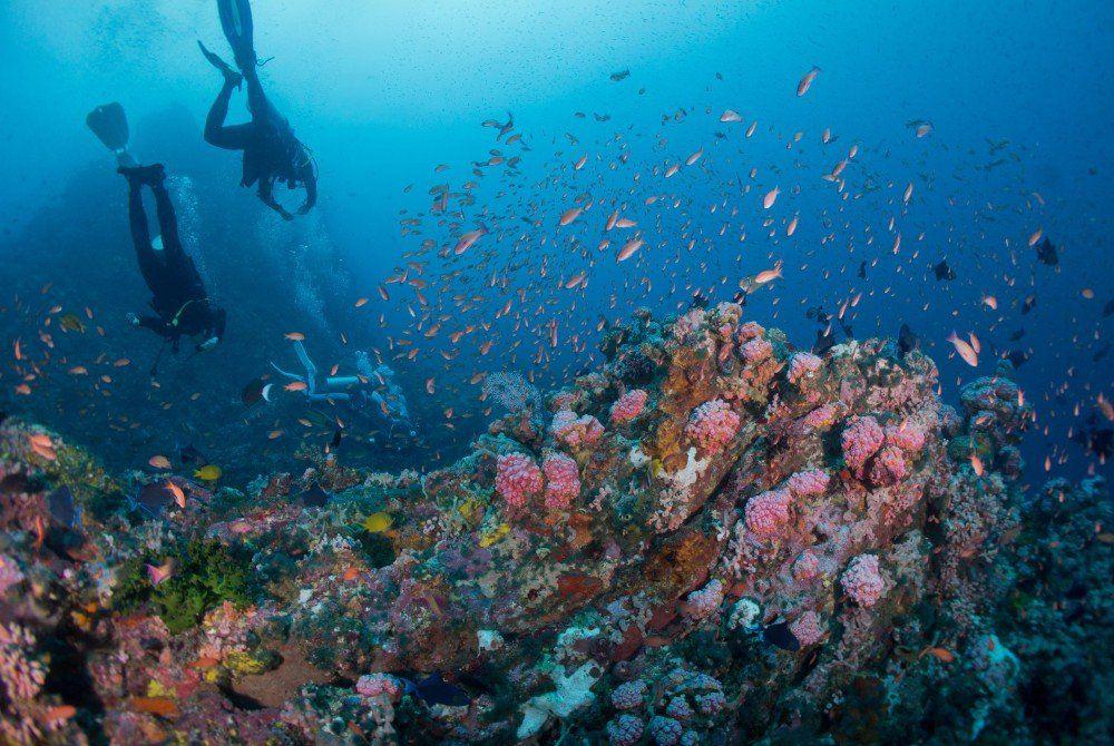 De vijf mooiste duikplekken in de Filipijnen