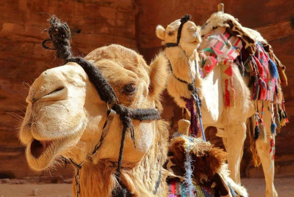 Jordanië rondreis van 10 dagen: route & tips