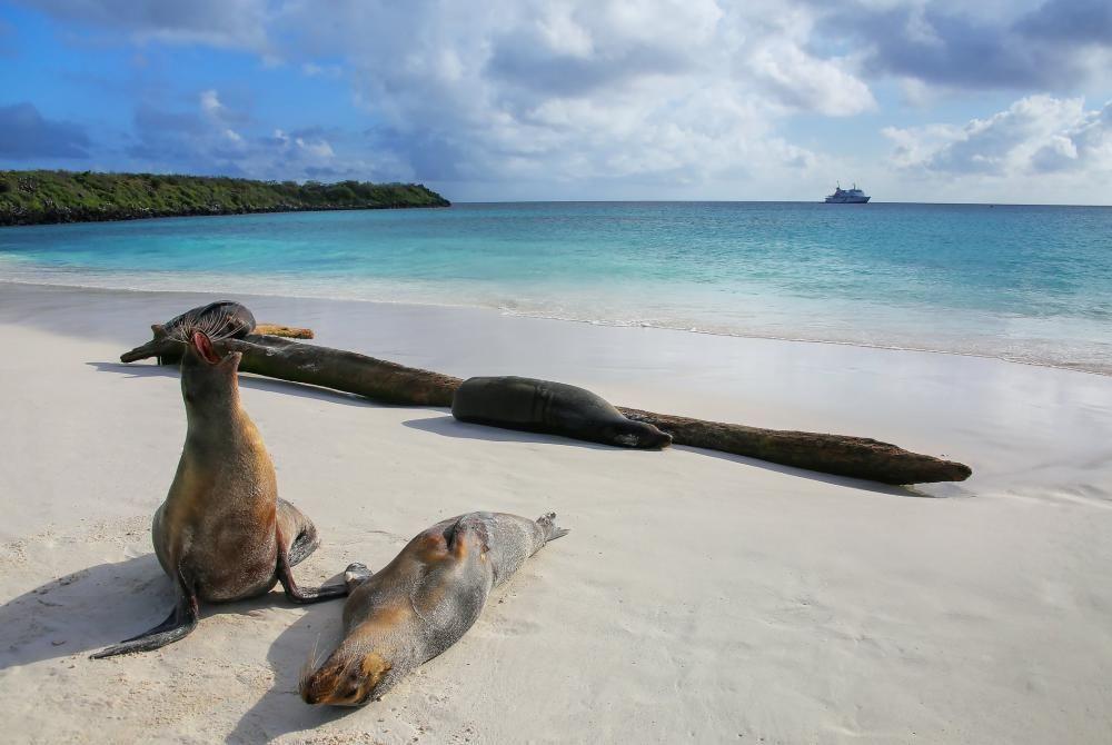 Reizen naar de Galapagos Eilanden: hoe doe je dat?
