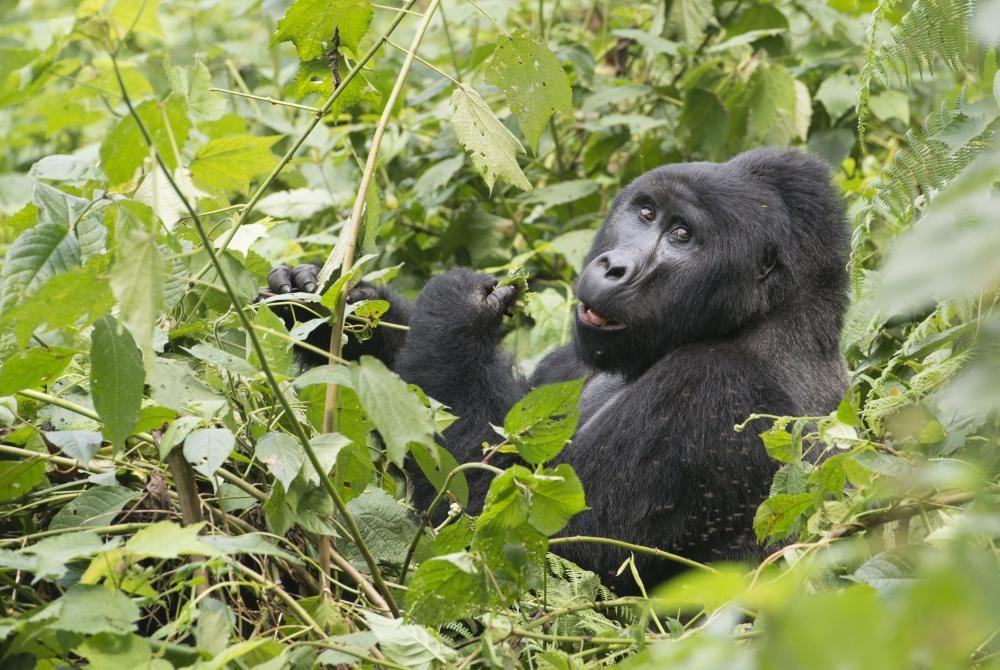 Zien: een schitterende reisdocu over Oeganda