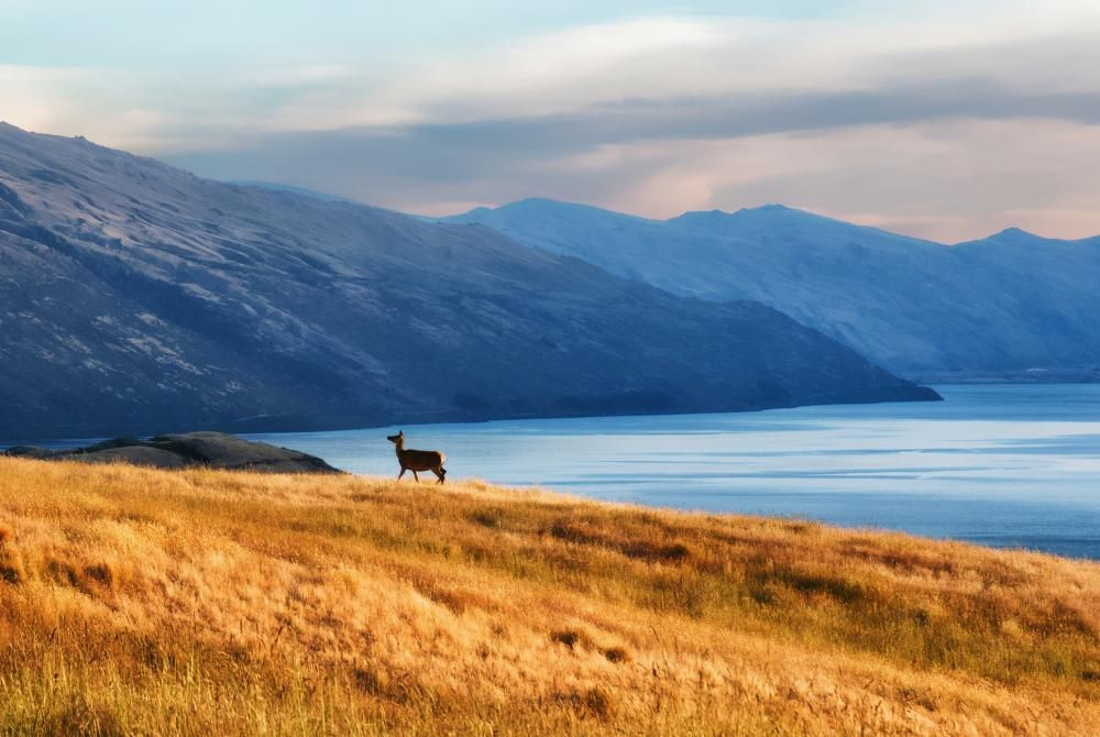Nieuw-Zeeland: het Noordereiland of Zuidereiland?