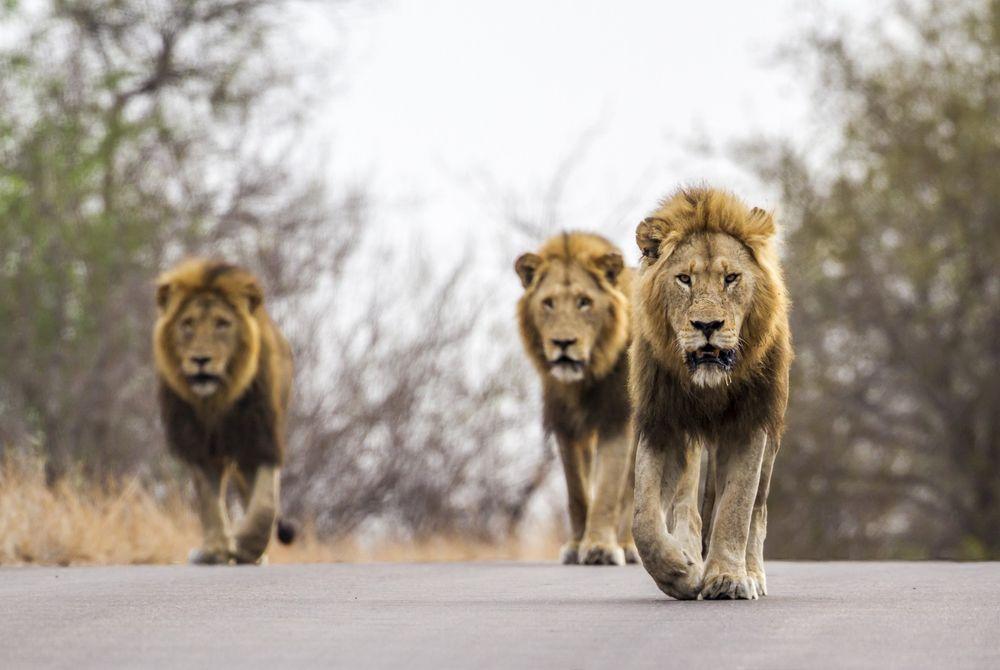 12x Waarom Kruger National Park een must-see in Zuid-Afrika is