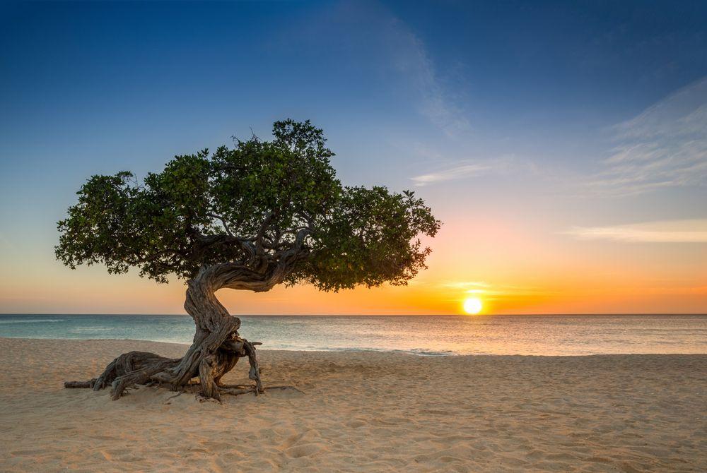 Top 15 mooiste bezienswaardigheden op Aruba
