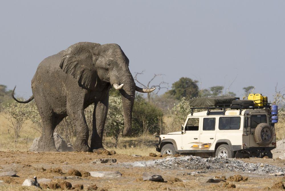 Op safari in Botswana? Dit moet je weten!