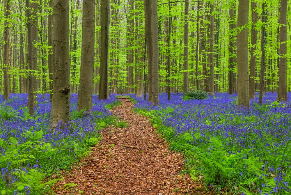 10x Mooiste natuurgebieden van België
