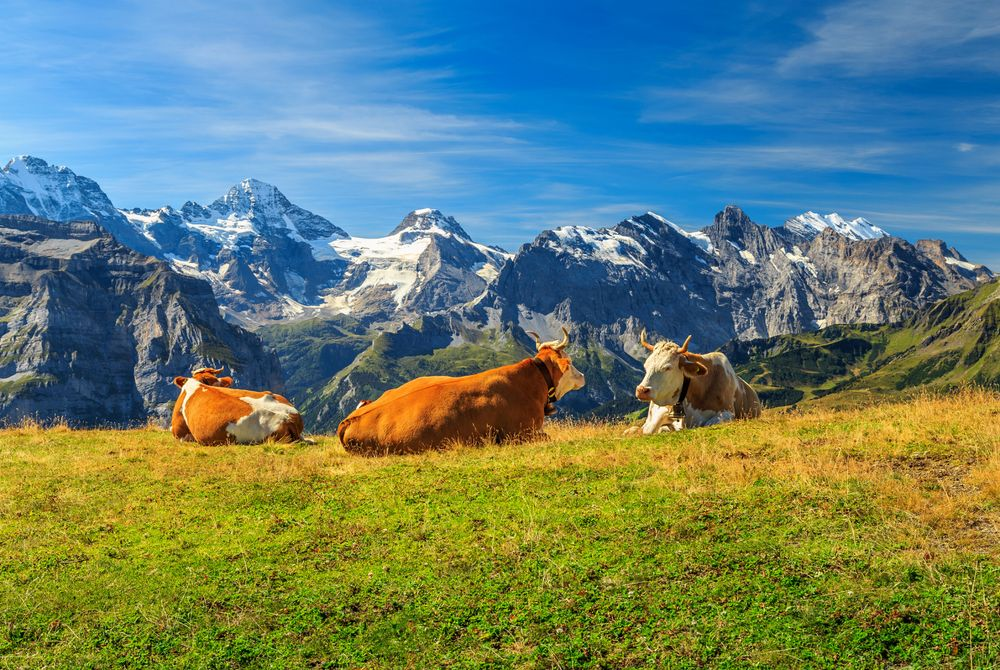 Op rondreis door zuidelijk en centraal Zwitserland
