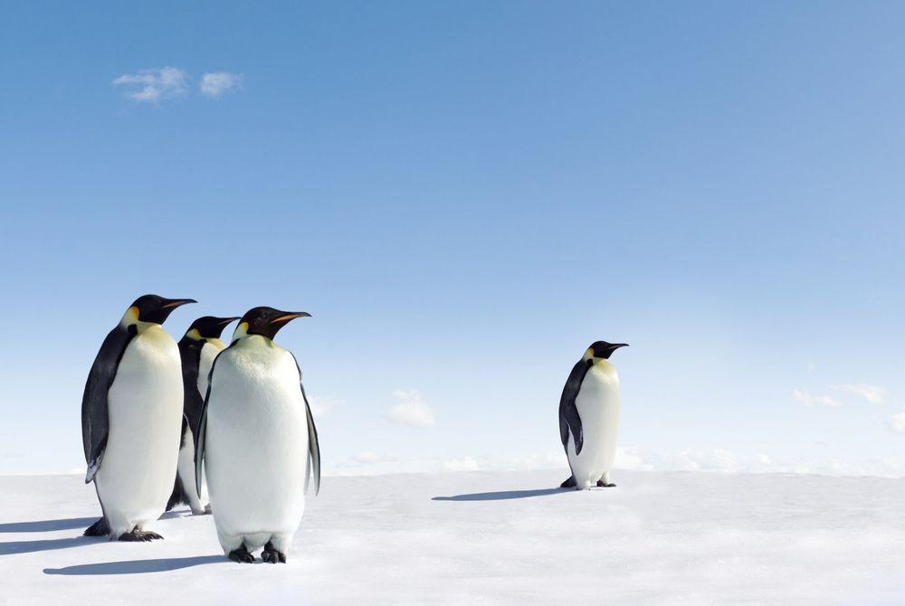 Daling toerisme Antarctica