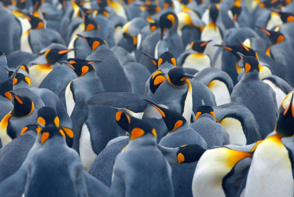 Bezoek Antarctica